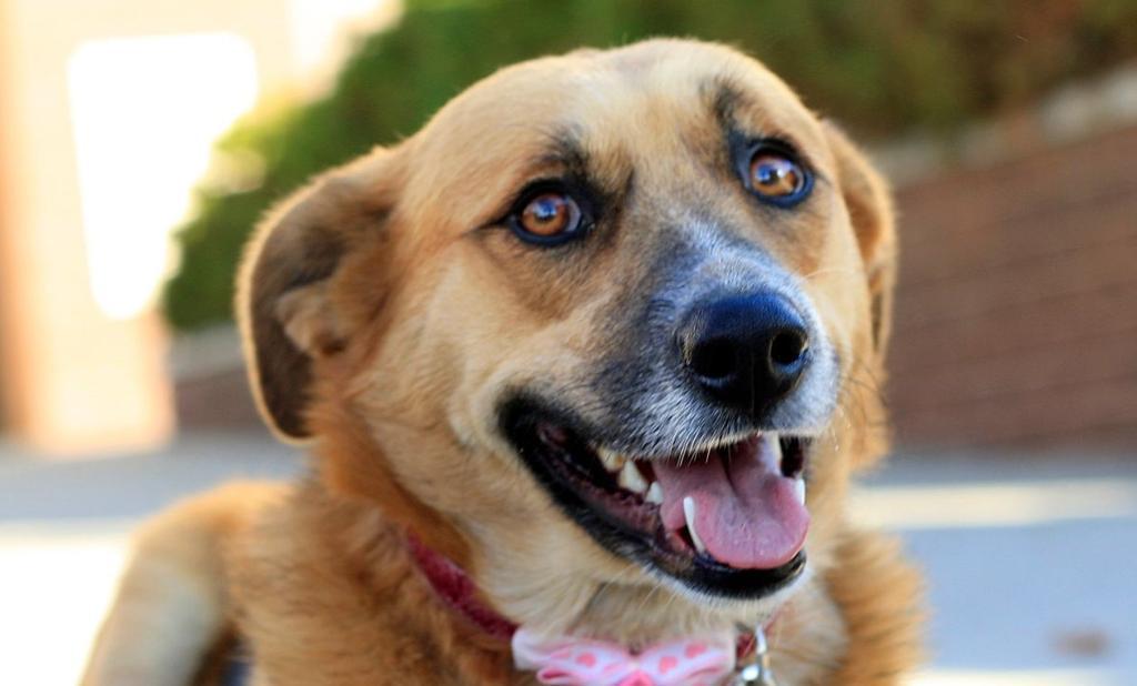 Pet of the week: Zoey | Pets | billingsgazette com