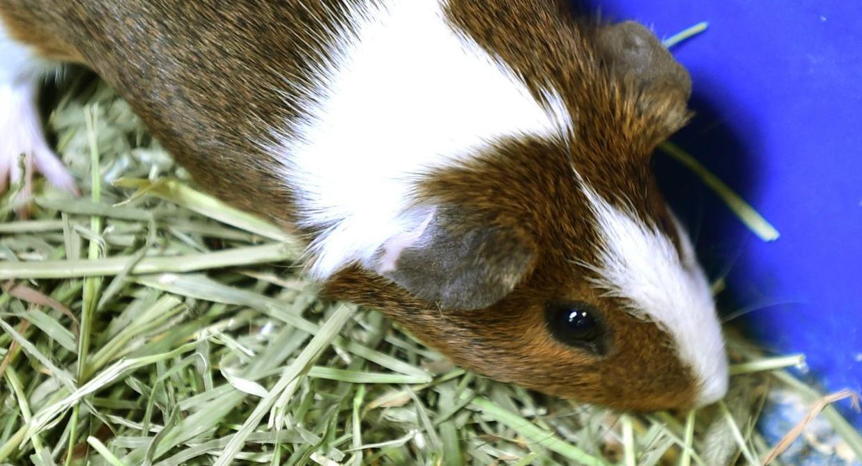 Pet of the week: Randolf