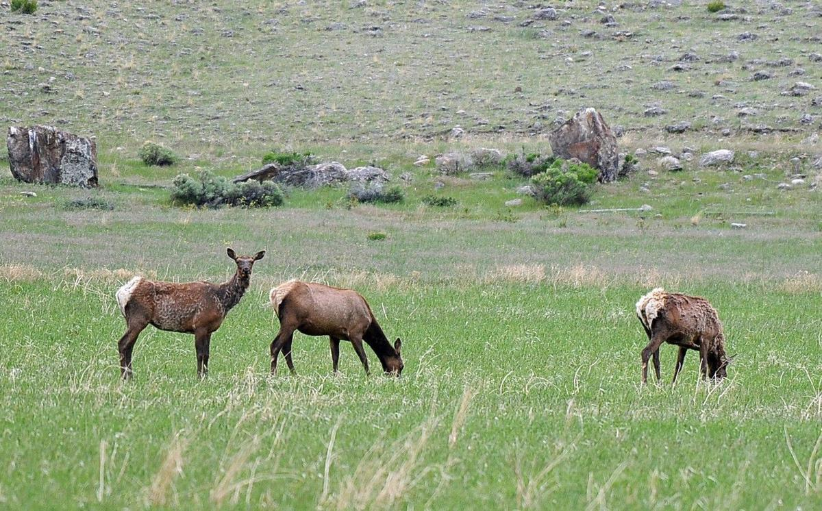 Elk control