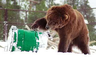 Center uses bears to help test products, teach lessons