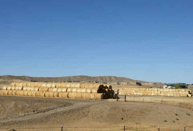 Hay is stacked near the Goggins feedlot