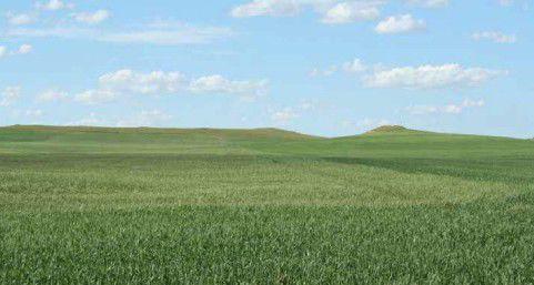 Dryland farm
