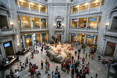 Smithsonian National Museum Of Natural History Director To Speak On