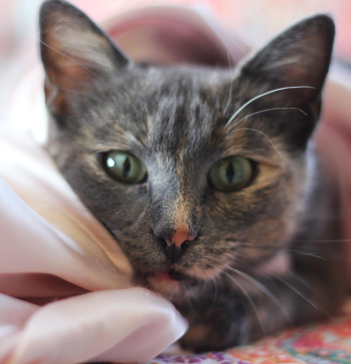 Pet of the Week: Clara
