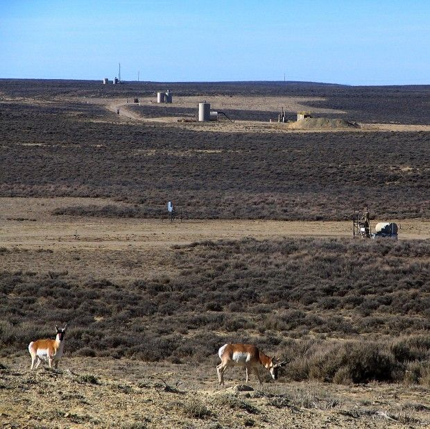 Two antelope graze near several wellpads north of Wamsutter