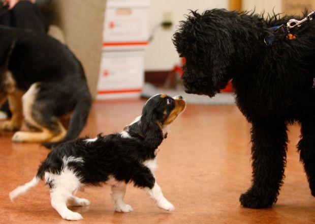 Dash greets Henry