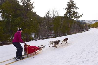 Sled dog racing provides peace amid the chaos of everyday life for amateur Billings musher