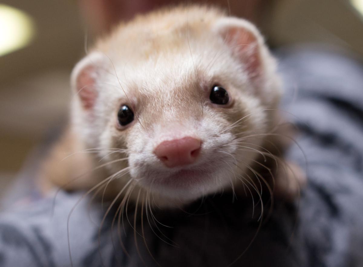 Pet of the Week: Slink