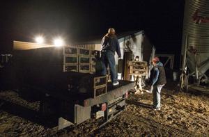 Bird farm's plans to raise sage grouse move forward