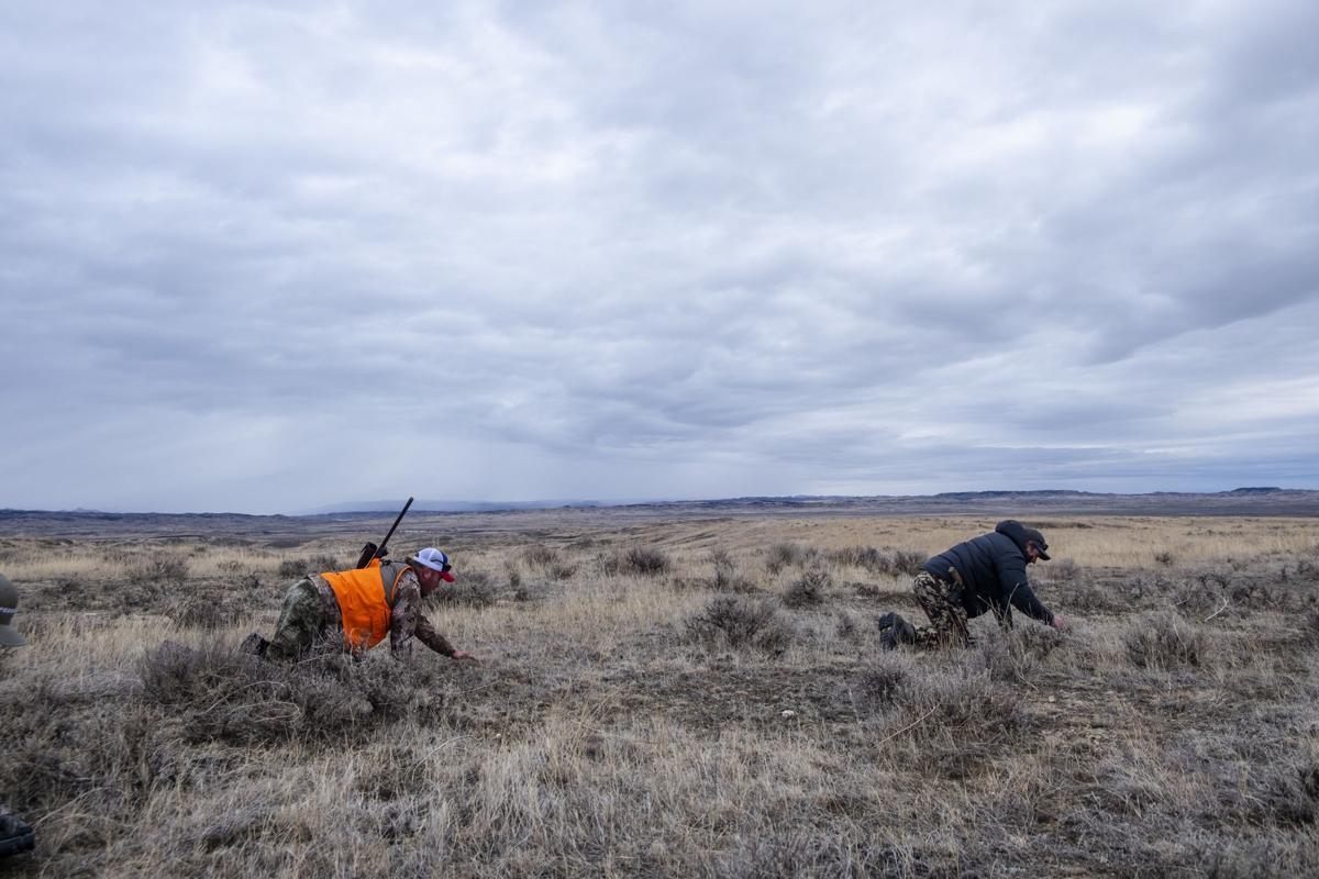 APR Bison Harvest