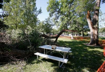 North Park tree