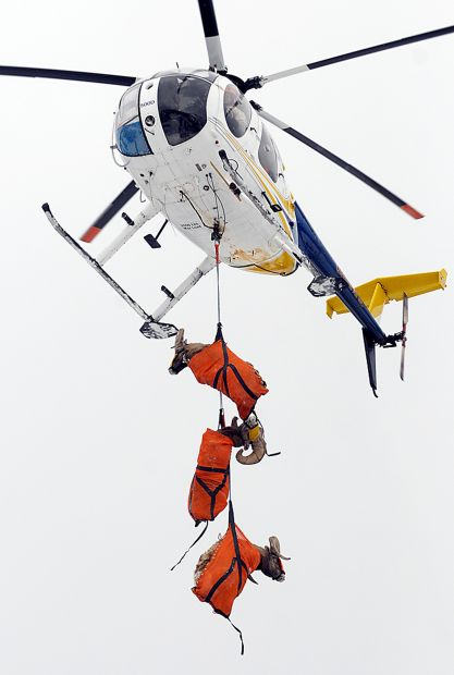 Three bighorns arrive at Big Arm by helicopter