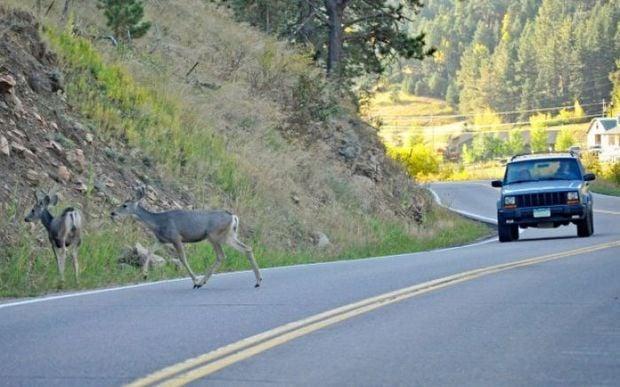 Vehicle vs. deer