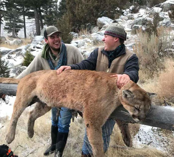 Social media did in Yellowstone lion poachers