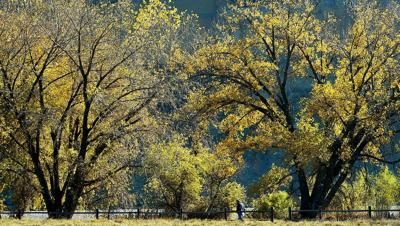 Colorful cottonwoods