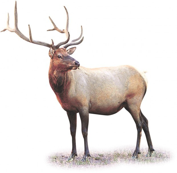 2010: Year of the elk