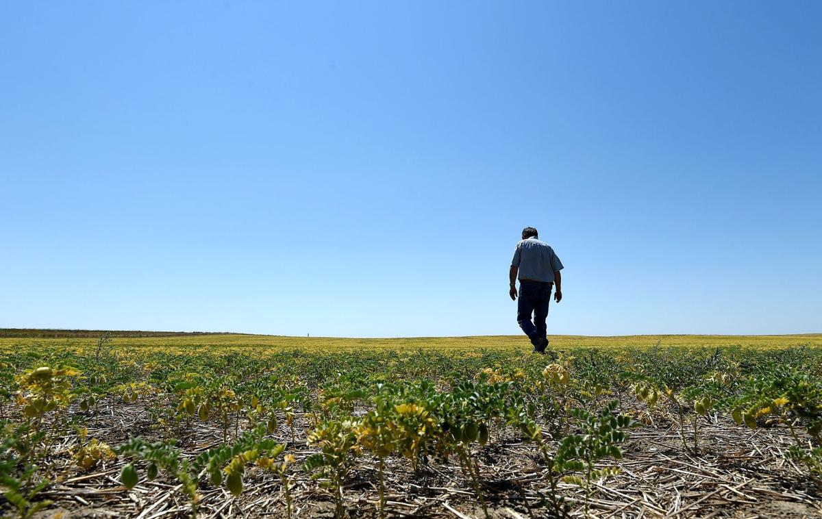 Drought Grant Zerbe