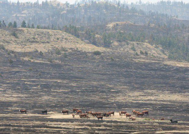 Northern Cheyenne Restoring Burned Forests Montana News