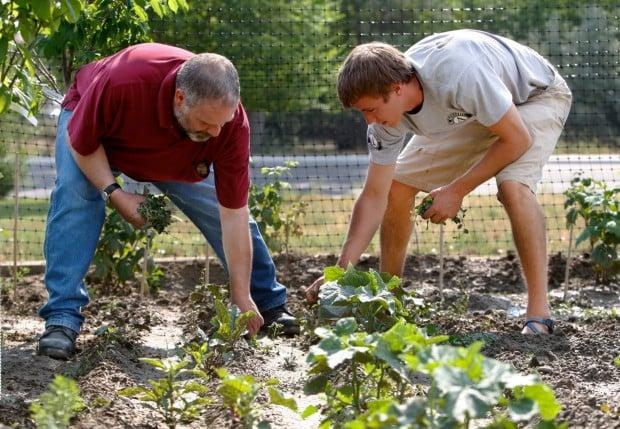 James Bentley and Alex Emick weed the community garden