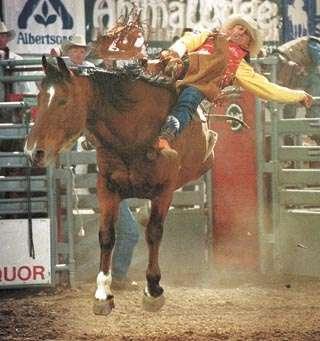Mortensen Steals Show With 82 Point Ride Sports Billingsgazettecom