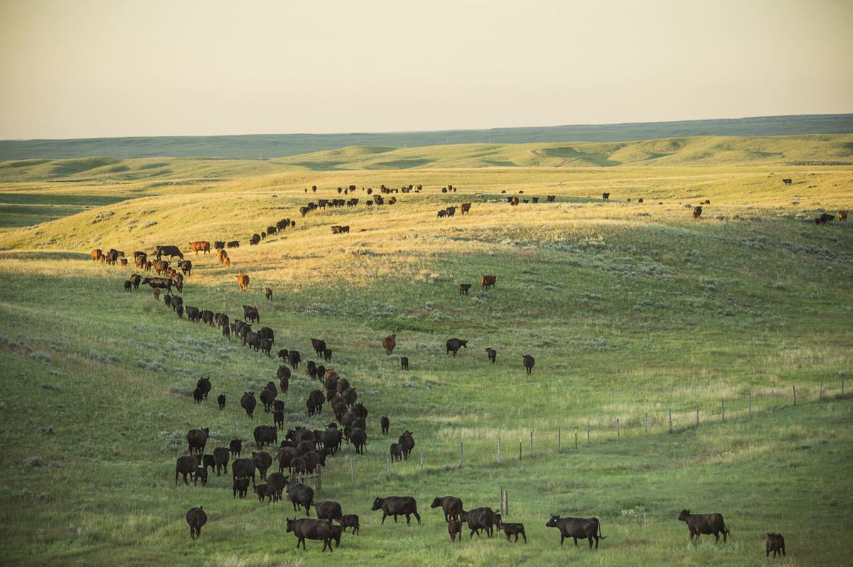 The Nature Conservancy's Montana Grass Bank