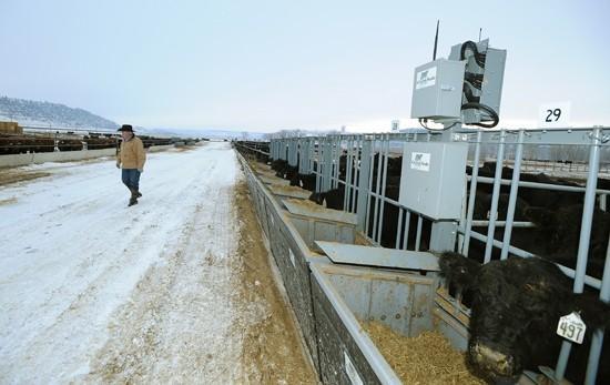 New technology targets feeding efficiency