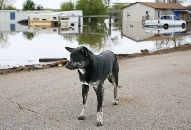 A dog stands on the frontage road