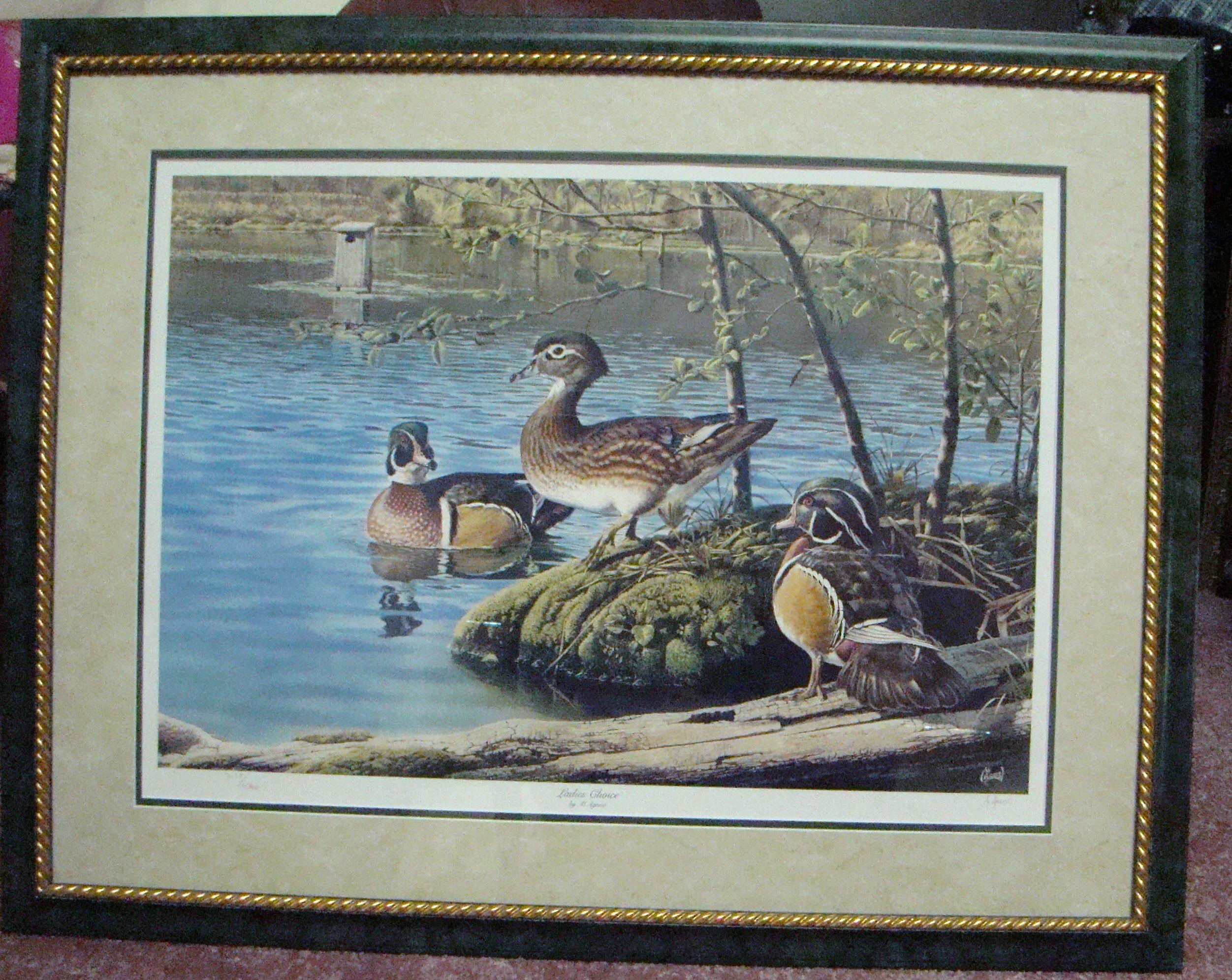 Wood Duck Framed Print image 1