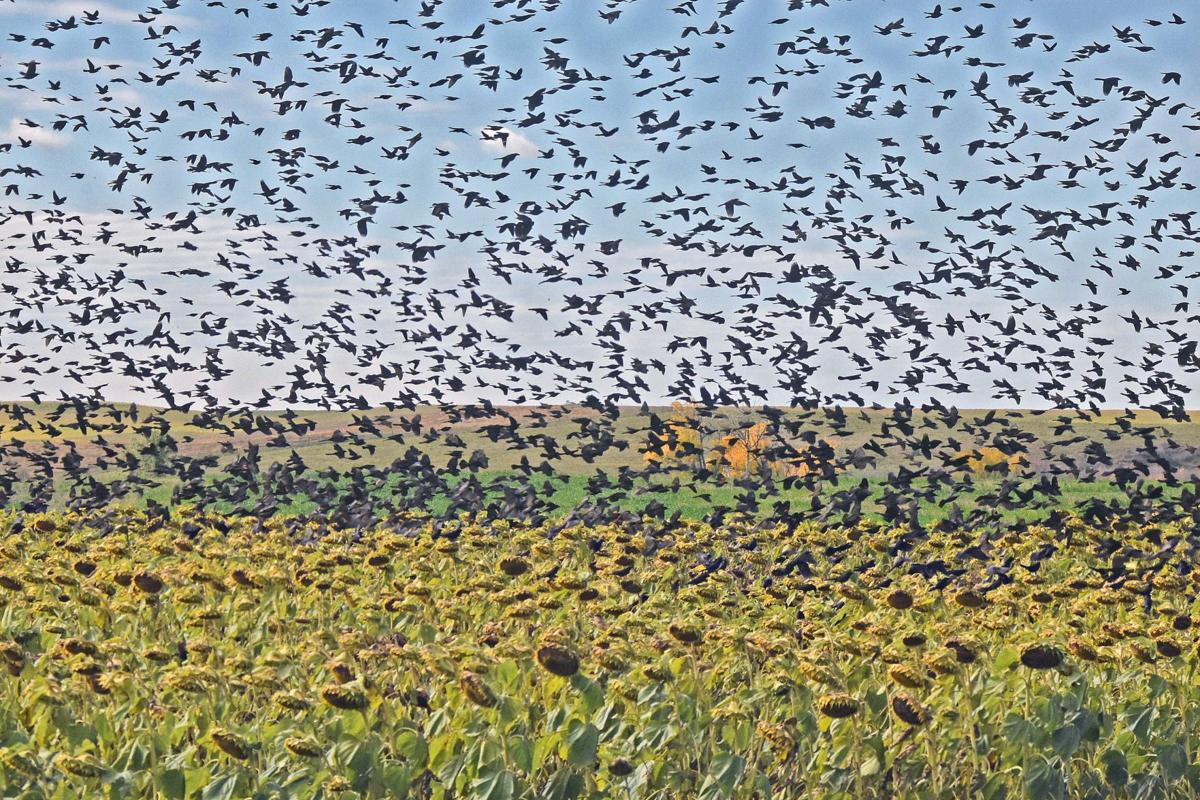 101017-nws-birds.jpg
