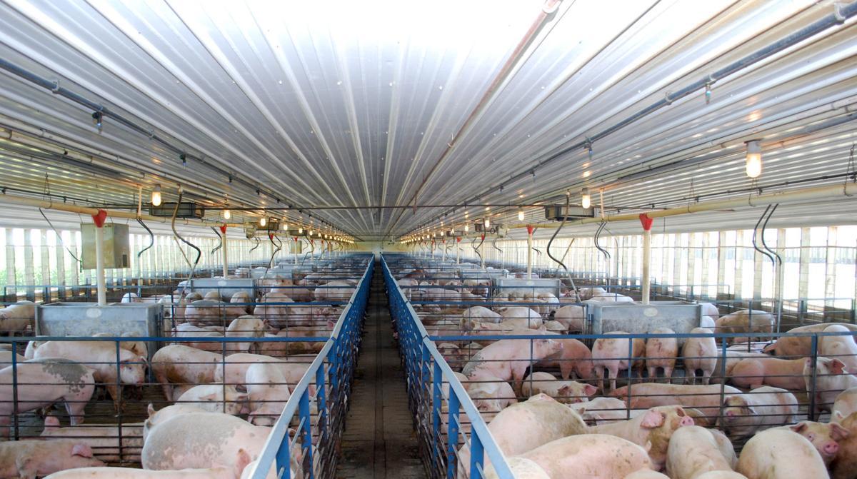 Animal feeding operation