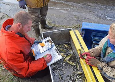 Fall fish surveys