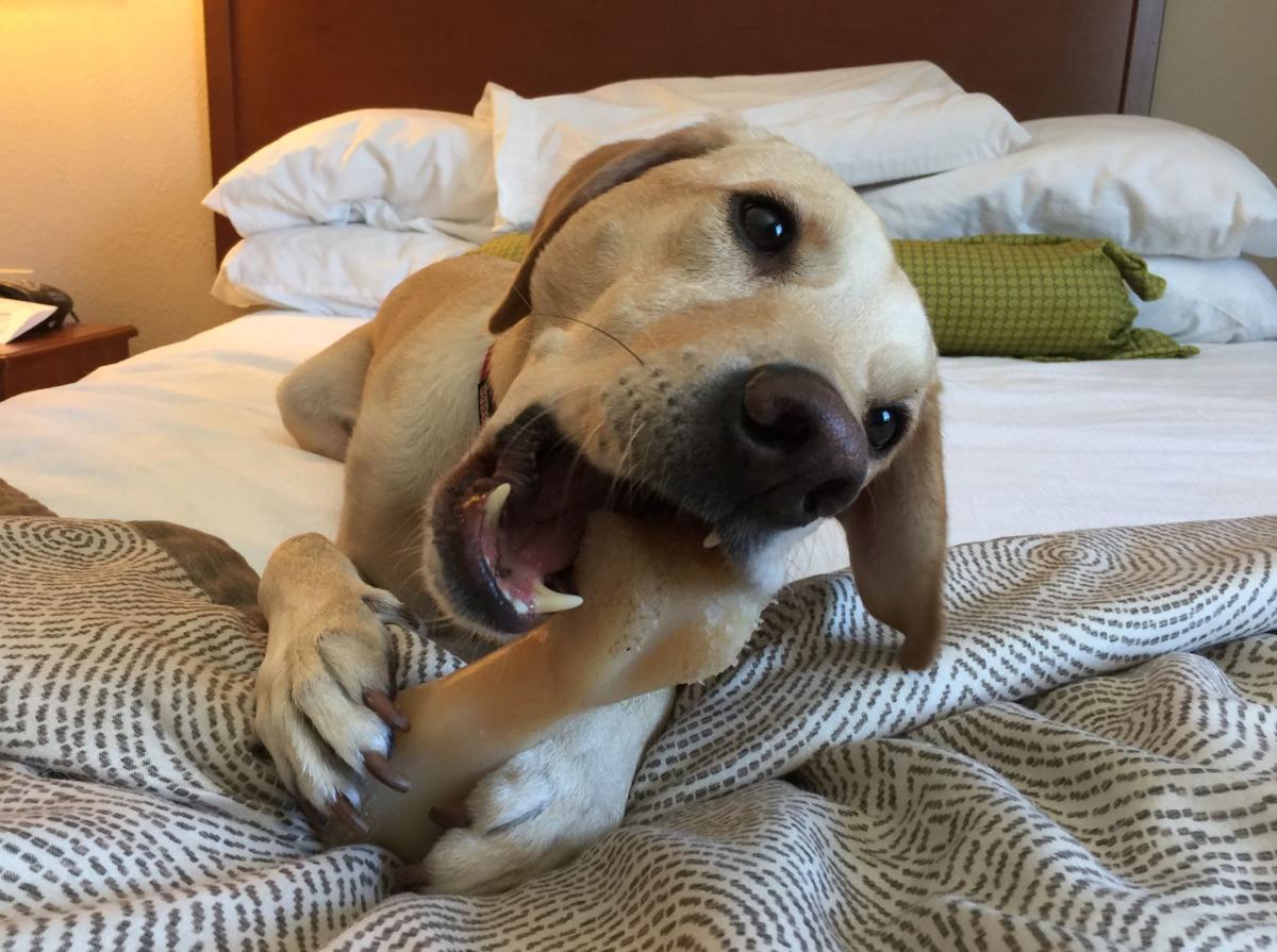 Discriminating Pet Parents' Top 5 Hotel Pet Amenities (Image)