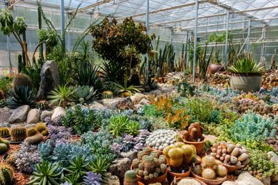 International Peace Garden home to – possibly – world's largest cacti and succulent collection