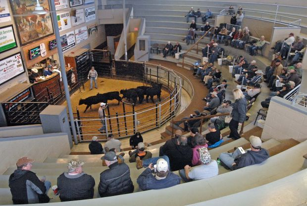 Livestock Auction Expands Successful Run
