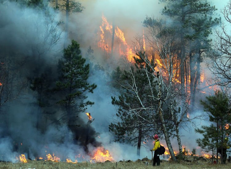Custer State Park Fire Remains Uncontained News Bismarcktribune Com