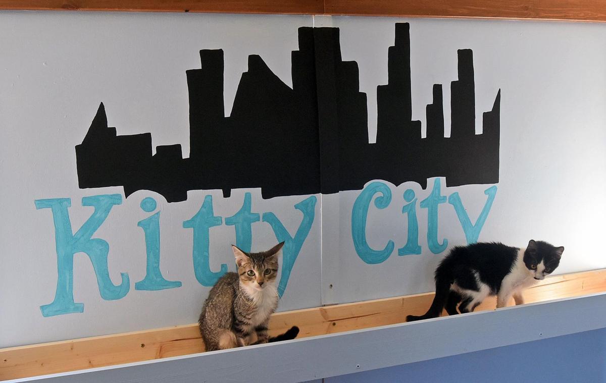 Kitty City cats