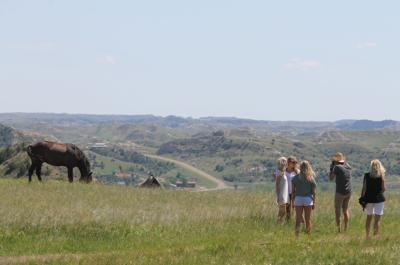 Tourists take photos of wild horses June 18, 2016, in the south unit of Theodore Roosevelt National Park. (April Baumgarten/Grand Forks Herald)