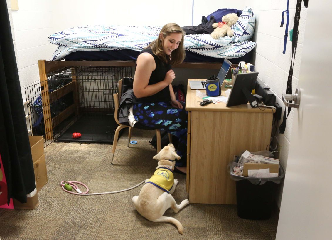 University Of Central Florida Welcomes Puppy To Dorm Life
