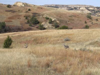 Elkhorn Ranchlands