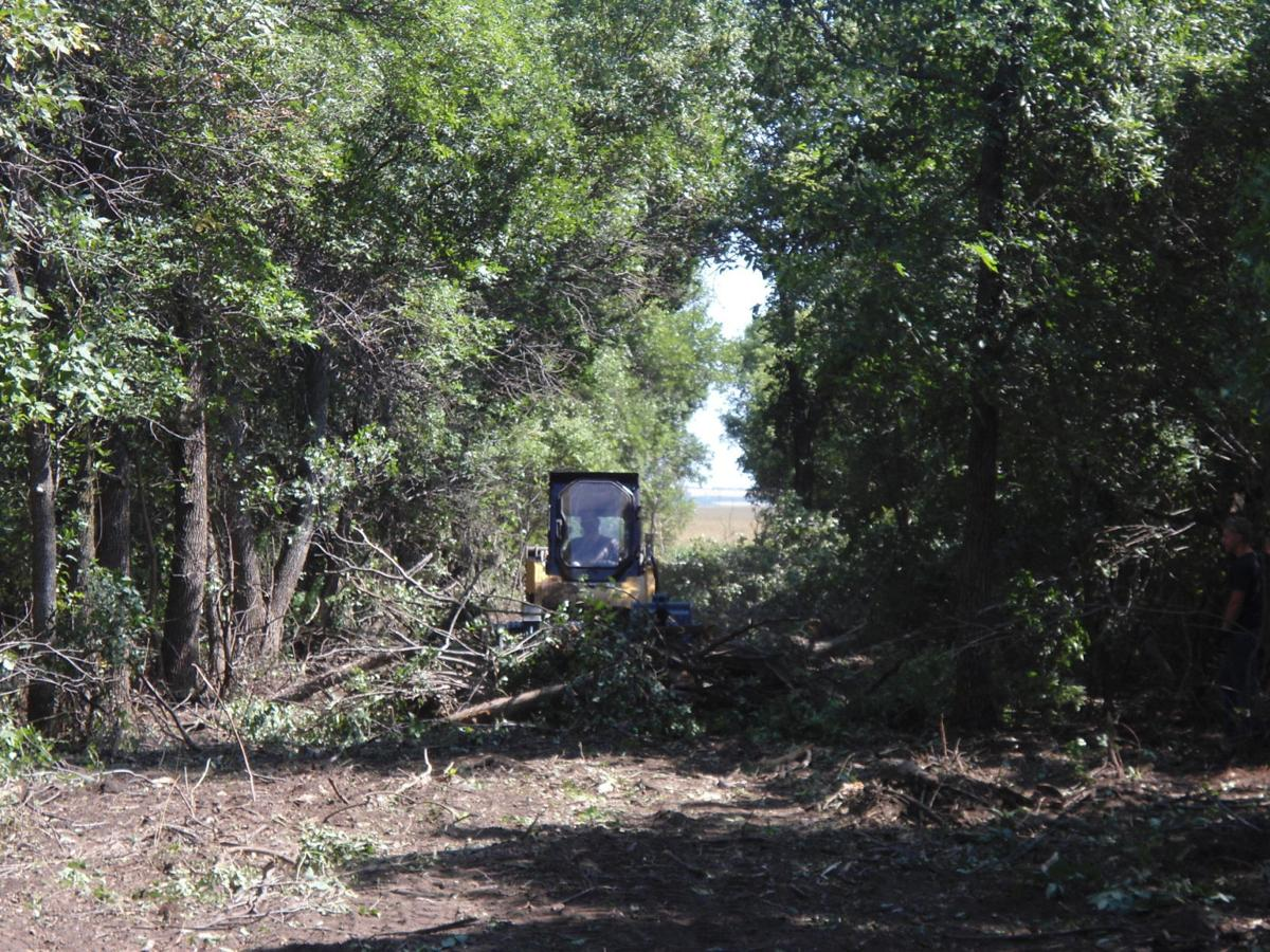 Trees need help in shelterbelts