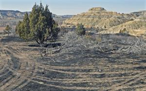 Horse Pasture Fire 80% contained