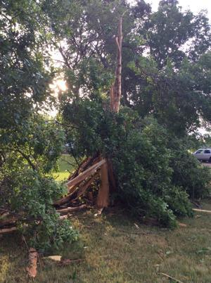 Sunday storms bring rain, some damage