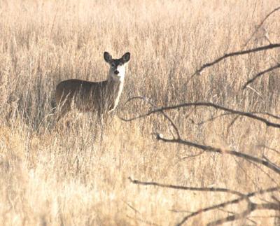 Deer licenses