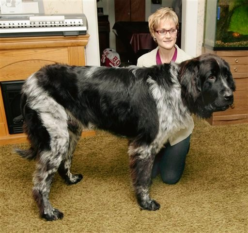 ND woman's 7-foot-long dog could be record holder