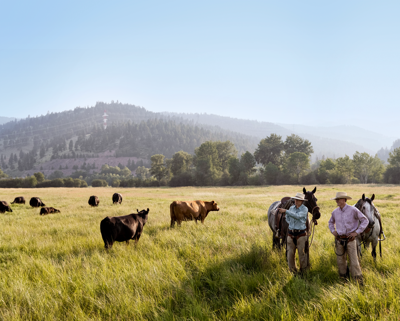 Issue No. 23: Grass-finished beef with regenerative cattle ranchers