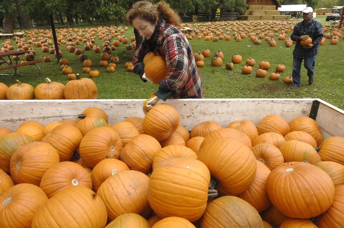 9-11 mm pumpkin patch 1