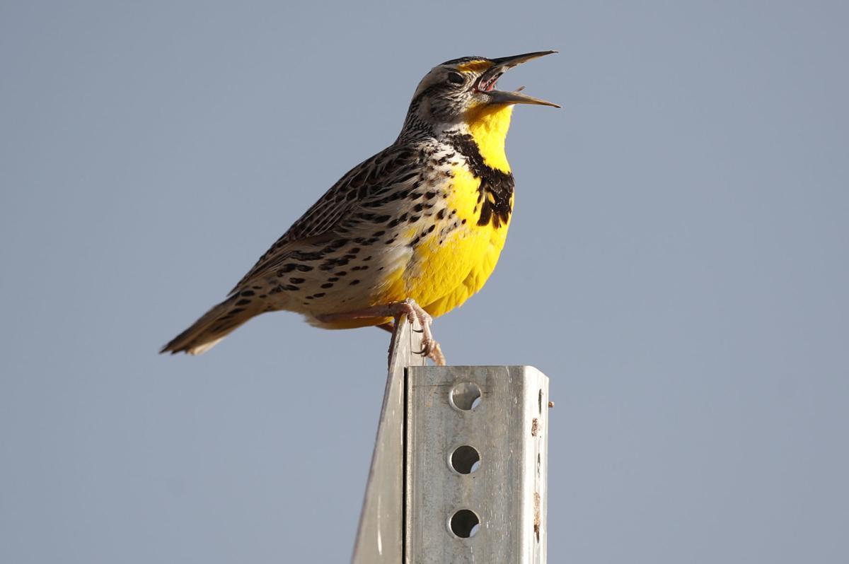 Billions Fewer Birds