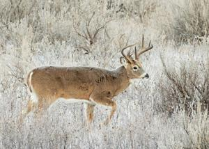 2021 deer licenses in North Dakota at highest level in a decade; drought a concern
