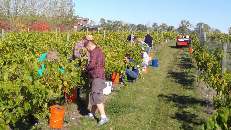 red trail vineyard