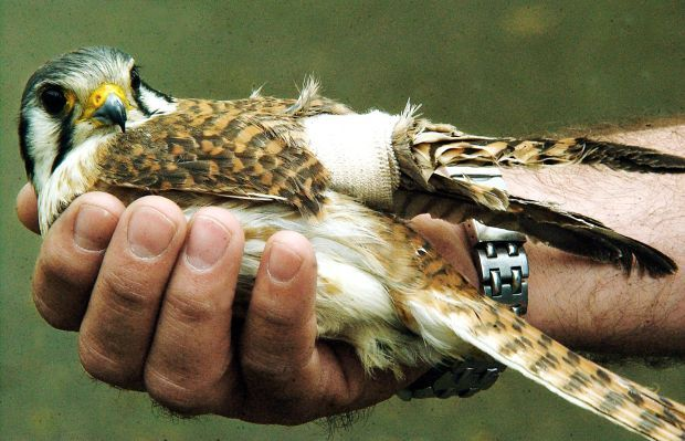 Birdhouses 101 - Protegiendo las aves que anidan